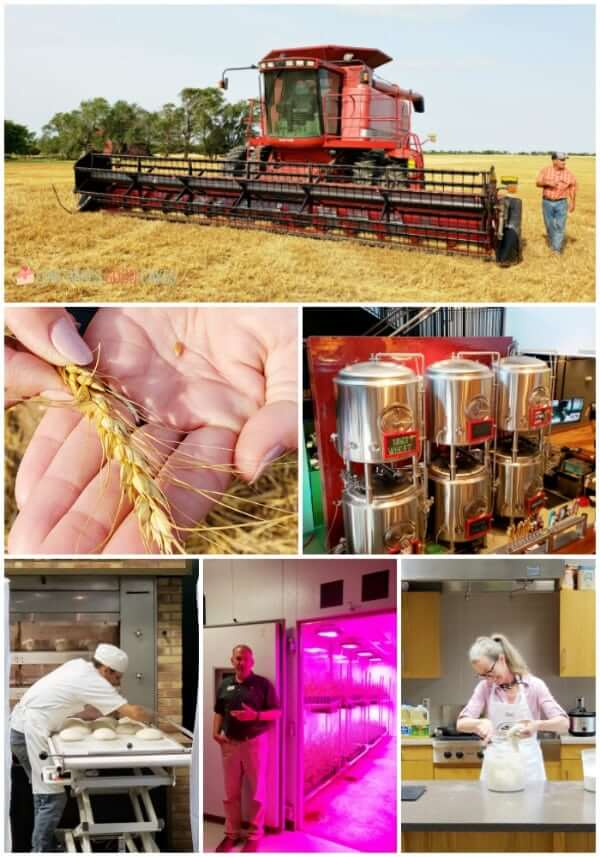 Kansas Wheat collage.